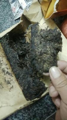 这是一张关于千两茶 盒装 熟茶的产品图片