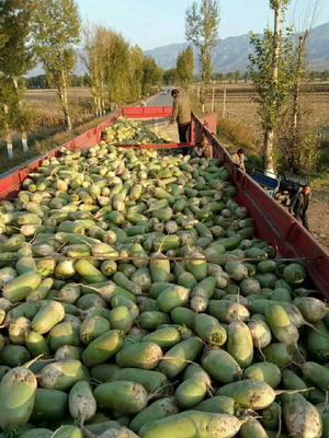山西省忻州市忻府区791罐萝卜 2.5~3斤