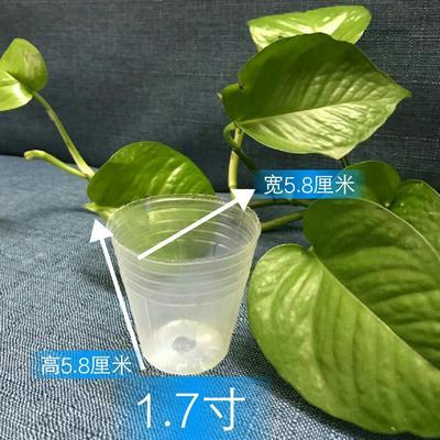 广东广州荔湾区育苗袋