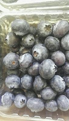 上海上海蓝莓 12 - 14mm以上 鲜果