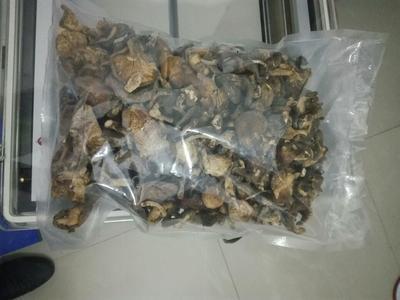云南大理蘑菇