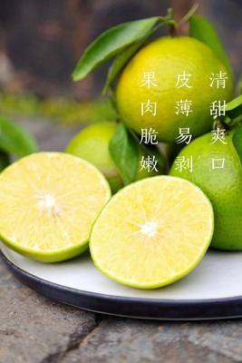 广西钦州皇帝柑 2.5 - 3cm 1.5 - 2两