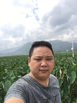 湖南永州槟榔芋 6cm以上