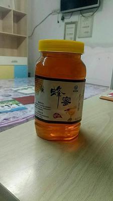 这是一张关于土蜂蜜 100% 2年以上 塑料瓶装 今年新鲜蜜的产品图片
