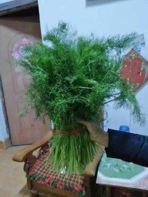 山东济南大茴香