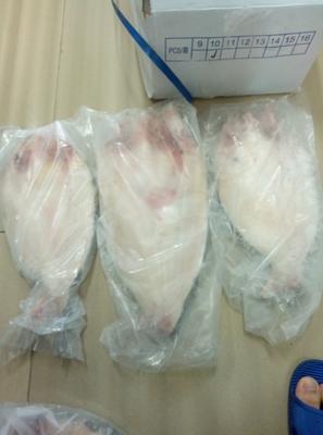 广西南宁巴沙鱼 人工养殖 1-1.5龙8国际官网官方网站