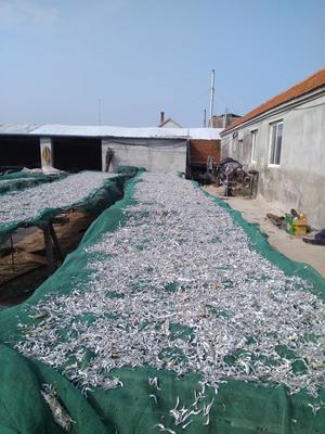 山东威海海燕鱼干 野生