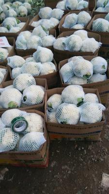 这是一张关于白花菜花 紧密 2~3斤 乳白的产品图片