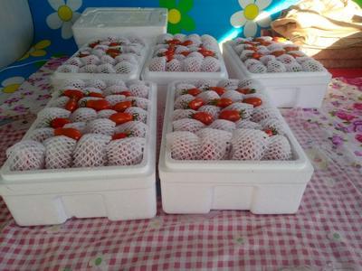 辽宁丹东丹东草莓 20克以下
