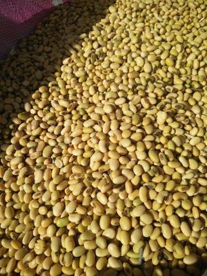 这是一张关于小粒黄豆 生大豆 1等品的产品图片