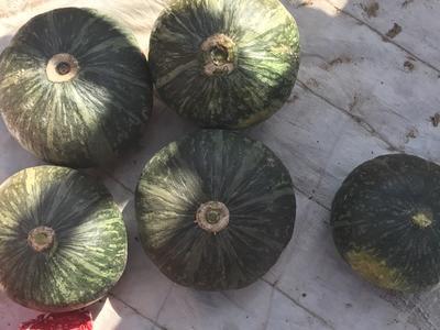 山东省潍坊市寿光市贝贝南瓜 1~2斤 扁圆形