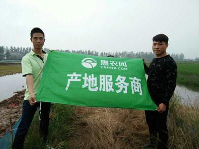 湖北荆州青壳小龙虾 4-6钱 人工殖养
