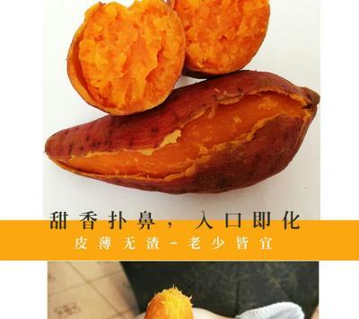 这是一张关于烟薯25 3两以上 黄皮的产品图片