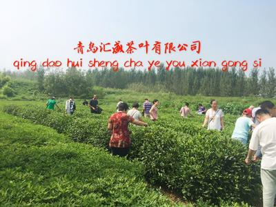 山东潍坊海青绿茶 袋装