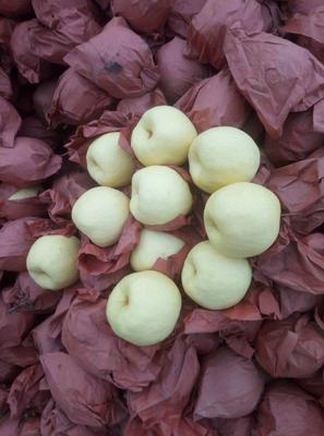 山西临汾酥梨 150-200g 70mm以上