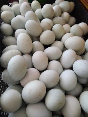 辽宁阜新普通鸡蛋 食用 箱装
