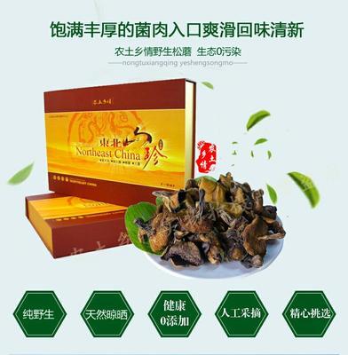 河北沧州蘑菇 松乳菇好货松蘑批发农土乡情食用菌野生蘑菇