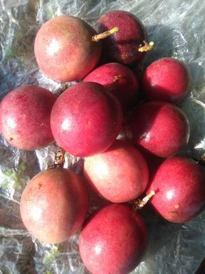 广西玉林紫红色百香果 90 - 100克 自家种的一手鲜果
