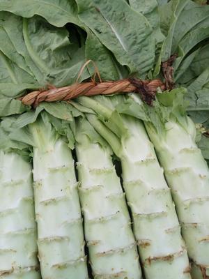 山东泰安尖叶青莴笋 40-50cm 1.5~2.0斤 20公分以内菠菜O.6元左右