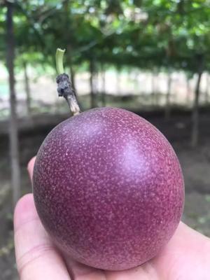 广西玉林紫香一号百香果 50 - 60克
