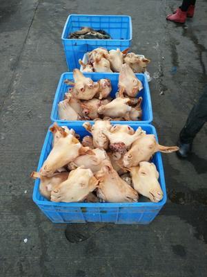 陕西榆林羊杂 1个月