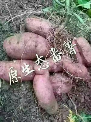 浙江丽水农家自制生地瓜干 1年 条状