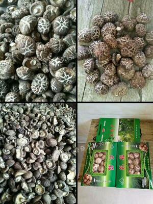 湖北襄樊干香菇 1年以上 袋装