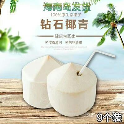 海南东方金椰子 1.5 - 2斤