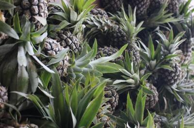 广西崇左泰国小菠萝 1 - 1.5斤