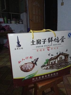 河北邯郸肉鸽蛋 食用 礼盒装