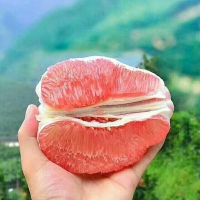 湖北宜昌红心柚 2.5斤以上 基地看货采摘