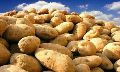 山西吕梁晋薯16号土豆 3两以上