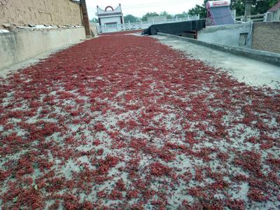 陕西渭南大红袍花椒 干花椒 一级