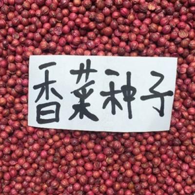 江苏宿迁沭阳县香菜种子 种子