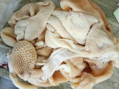 陕西榆林羊肚 3-6个月