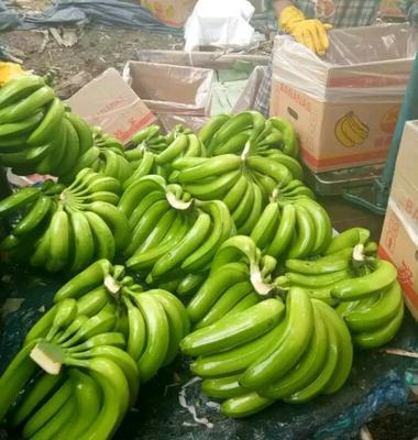 广东广州广东香蕉2号 40斤以下 七成熟 8斤装