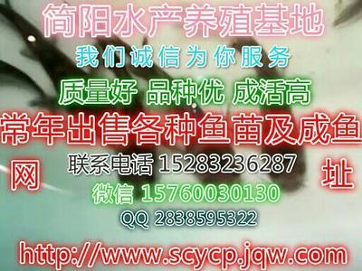 四川资阳简阳市杂交黄骨鱼 0.05龙8国际官网官方网站 人工殖养