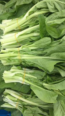 湖北省荆州市石首市白菜苔 25~30cm