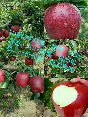 甘肃陇南花牛苹果 纸袋 全红 75mm以上 苹果 花牛