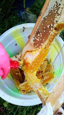 贵州遵义土蜂蜜 90%以上 2年以上 玻璃瓶装 包邮费