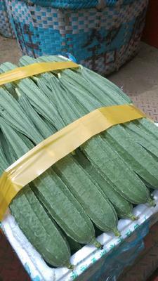 广西北海棱丝瓜 35cm以上