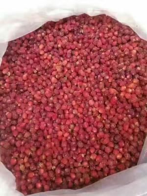 浙江绍兴红豆杉 纯粮率≥95% 袋装