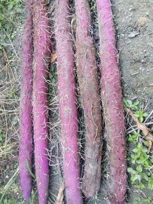 江西鹰潭贵溪市紫板薯 2斤以上