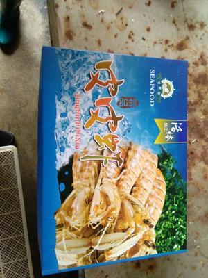 江苏连云港冻品海鱼 6-12个月