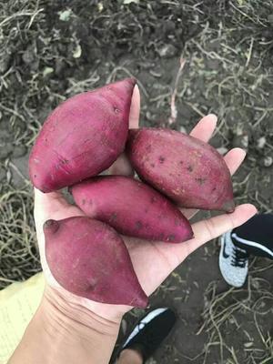 这是一张关于越南紫薯 2两以下 中紫薯 五斤装包邮的产品图片