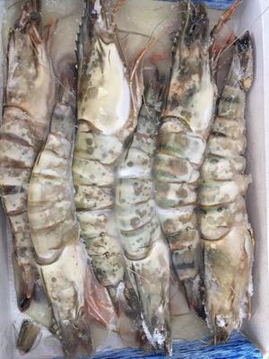 广东广州对虾 9钱以上 野生