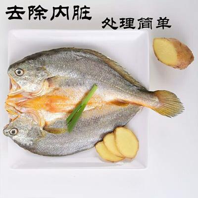 福建宁德大黄鱼 人工殖养 0.5公斤以下