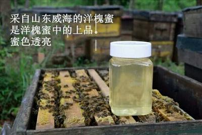 山东枣庄山亭区洋槐蜂蜜 100% 2年以上 塑料瓶装