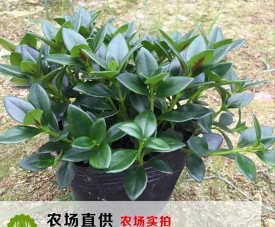 福建省龙岩市漳平市花雨系列