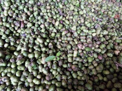 这是一张关于茶叶籽的产品图片
